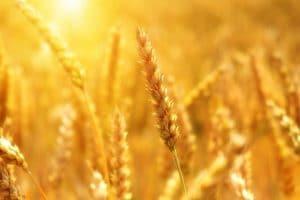 Professionnels : le stockage des grains mérite la plus grande attention