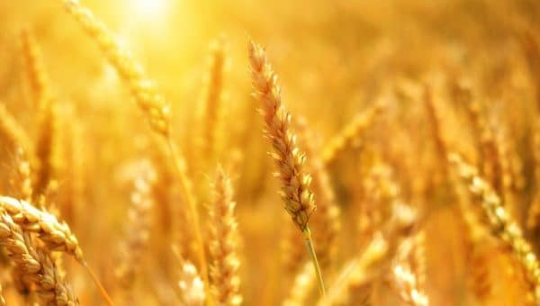 Professionnels : le stockage des grains mérite la plus grande attention
